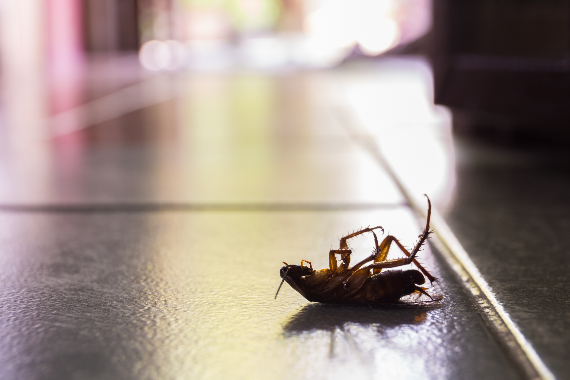 Cockroach Control, Pest Control in Strawberry Hill, Whitton, TW2. Call Now 020 8166 9746