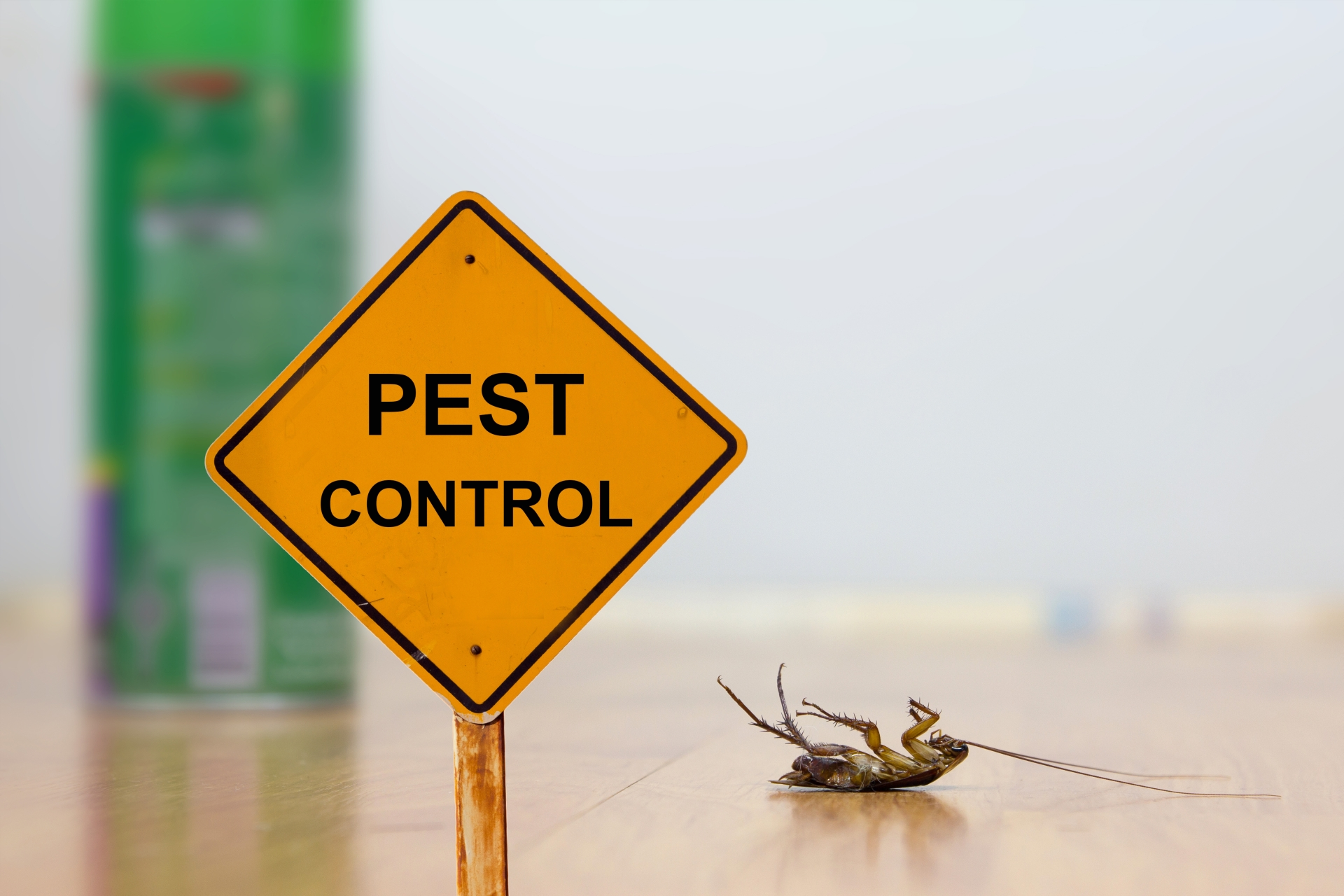 24 Hour Pest Control, Pest Control in Strawberry Hill, Whitton, TW2. Call Now 020 8166 9746